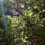 Queensland, Heimat der Regenwaelder
