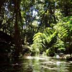 Fraser Island wanggoolba Creek