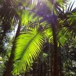 Fraser Island Regenwald
