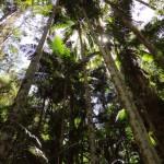 Fraser Island Beauties