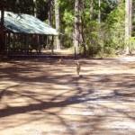 Fraser Island Dingo Walkway