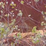 King Canyon - mit Baby im Beutel