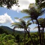 Lookout Mount Alexandra