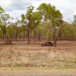 Fahrt ins Outback - aaalter Unfallwagen