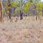 Fahrt ins Outback - altvertraut