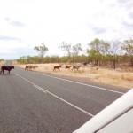 Outback - oberste Unfallgefahr