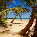 Mission Beach - Wir wollen nicht mehr weg