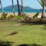 Mission Beach - Besuch