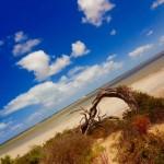 South Australia - Coorong National Park