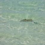 Whitsunday Island Segeltour 0060