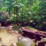 Daintree Nationalpark - Mossman-Zauberwald