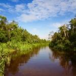 Regenwald und wir mittendrin