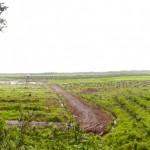 Palmölplantage