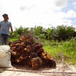 Palmölfrüchteberg