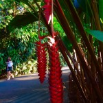 Singapore - Botanischer Garten