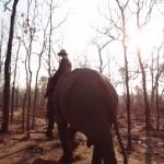 Elefantenleben im Yok Don