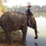 Elefanten Waschtag