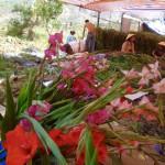Blumenverkauf überall