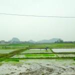 Ha Long Bay  - Reisfelder überall auf dem Weg