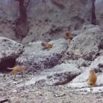 Ha Long Bay - Affen überall