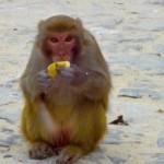 Freche Affen...