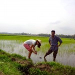 Hoi An - Heiki die neue Reisbäuerin :-)