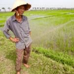 Hoi An - Einfach goldig... Werbung für sein Reisfeld.