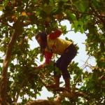 Banlung - Klettergerüst in Kambodscha - die Baum