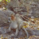 Battambang - Schwager wie man sehen kann :-)