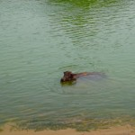 Don Det - Das Nilpferd Asiens...