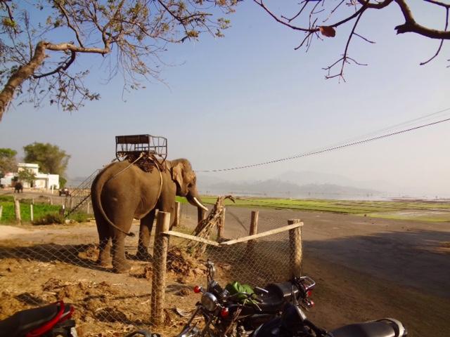 Elefantensklave